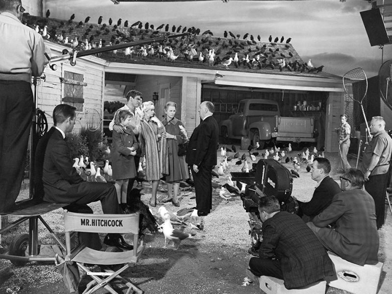 鳥_The Birds_電影劇照