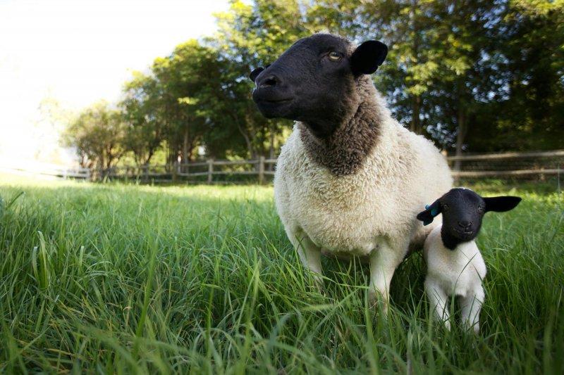 我家有個開心農場_The Biggest Little Farm_電影劇照