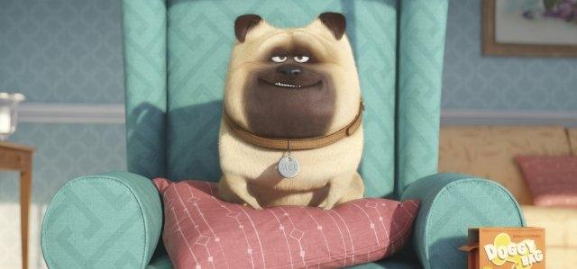寵物當家_The Secret Life of Pets_電影劇照