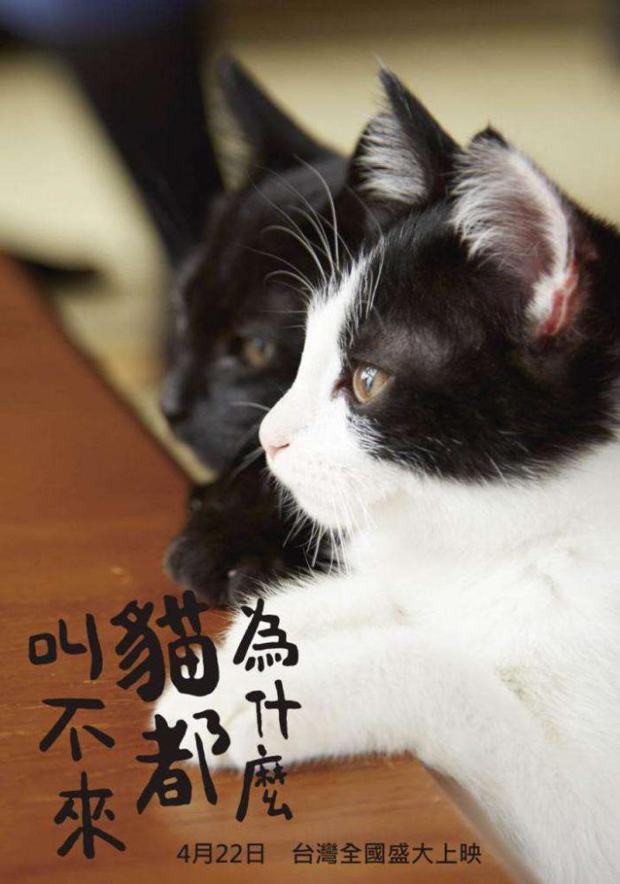為什麼貓都叫不來_Neko Nanka Yondemo Kona_電影海報