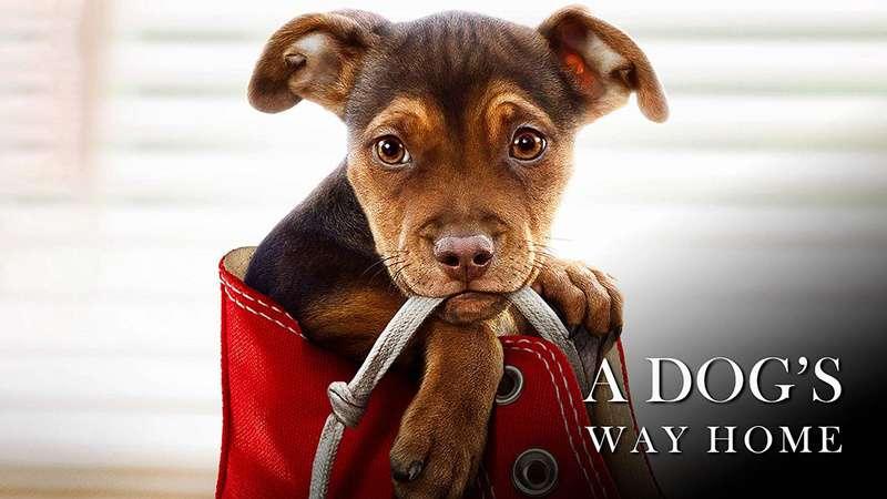 為了與你相聚_A Dog's  Way Home_電影劇照